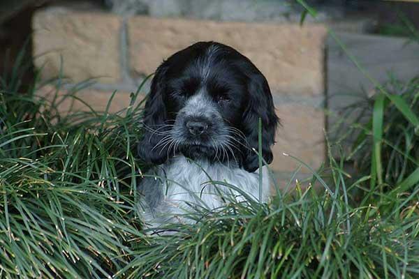 Ellie hiding in the Mondo grass